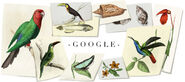 Google William John Swainson's 224th Birthday