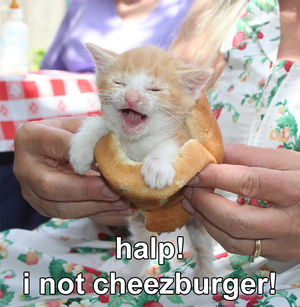 File:Cheezburgercat.jpg