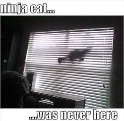 Ninjacatwasneverhere