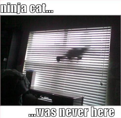 File:Ninjacatwasneverhere.PNG
