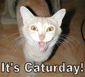 File:Caturday.jpg