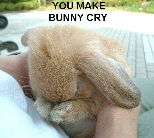 File:Youmakebunnycry.PNG
