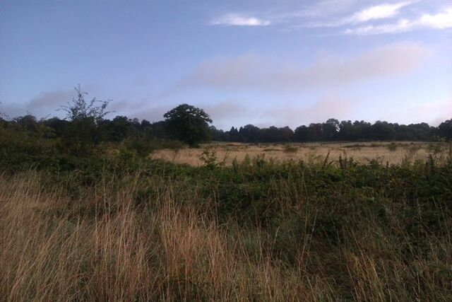 File:Copped Hall field late Summer.jpg