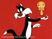 Sylvester1234