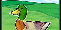 Card: Duck