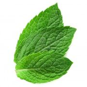 12672051-three-fresh-mint-leaves-isolated-on-white-background