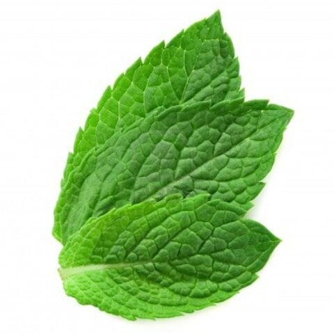 File:12672051-three-fresh-mint-leaves-isolated-on-white-background.jpg