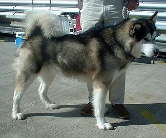 File:The Lost Boys Nanook.jpg