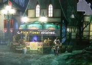 Pixie-flower