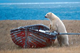 File:BearBoat.jpg