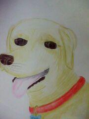 Vincent Dog