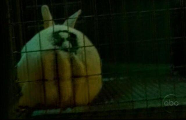 File:Bunny number 8.JPG