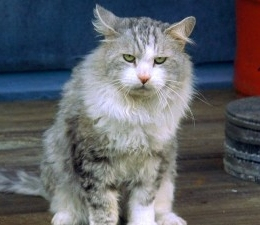 Nadia Cat.jpg