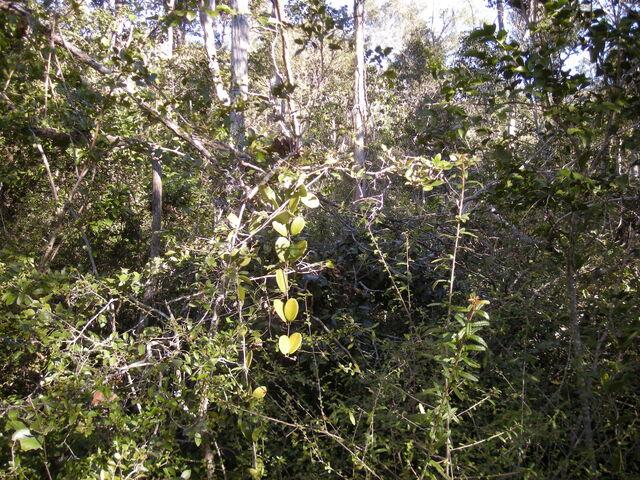 File:Dry rainforest.jpg