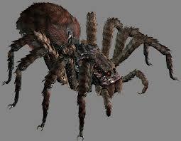 File:Arañalotr.jpg
