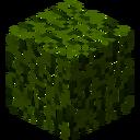 LeavesCypress