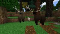 Elk love - Woodland-Realm B28