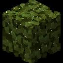 LeavesBaobab
