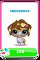 LittlestPetShopPetsPricesSheepdog.png