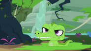 Alligator appears