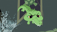 Alligator eats Minka