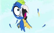 MacawScared