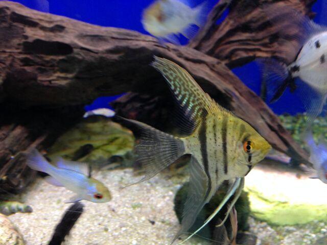 File:Fish 21.jpeg