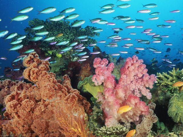 File:Reef-life-pixels-tagged-coral-sea-underwater-556423.jpg