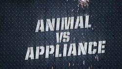 Animalvsappliance