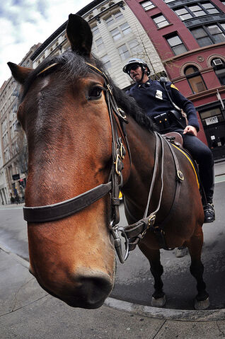 File:NYPD Snout.jpg