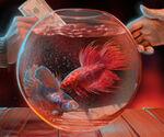 Mw bk fish 235x196 01