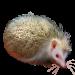 Item hughshedgehog 01