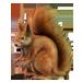 Item red squirrel 01