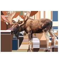 Huge item moose 01