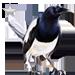 Item jailbird silver 01