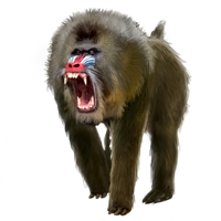Huge item mandrill 01