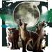 Item wolfpackmoon 01