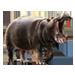 Item hippopotamus 01