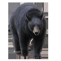 Huge item blackbear 01