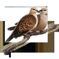 Huge item turtledoves 01