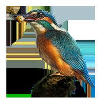 Huge item kingfisher 01