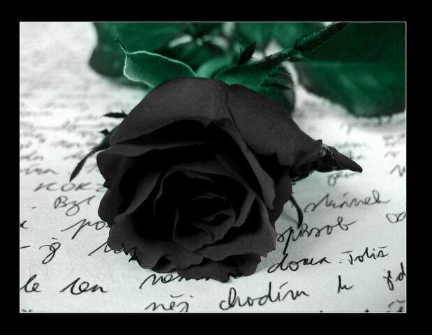 File:Black-Rose-gothic-28044558-858-665.jpg