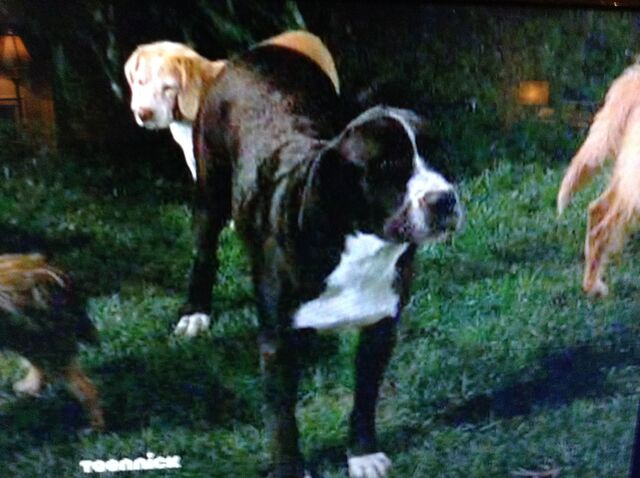 File:Lucky the Dog.jpg