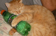 Cat-with-mountain-dew