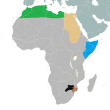 TV-A Somalis