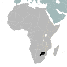 TV-Africa example primary turn