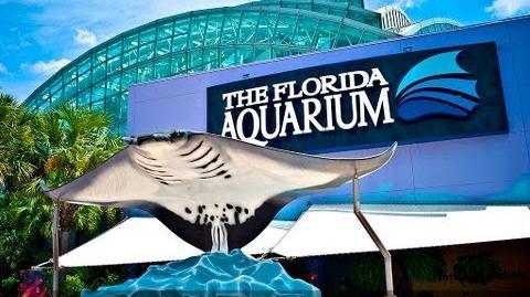 TAMPA FLORIDA AQUARIUM - CHANNELSIDE FLORIDA - COBY CAM 5002