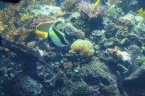 GA. Aquarium 176