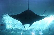 GA. Aquarium 065