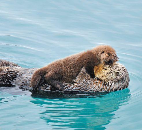 File:True-love-otters 63792 600x450.jpg